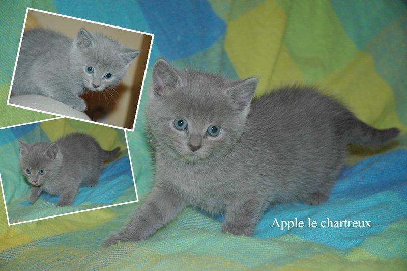 apple2mois41.jpg